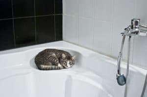 cat on the bathtub