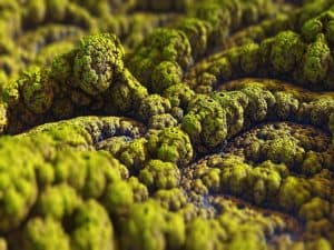 A microscopic image of mold fungus.