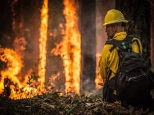 A fireman looking at a forest fire.