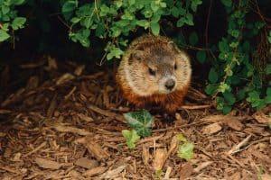 animal in bush - prevent animal break-ins